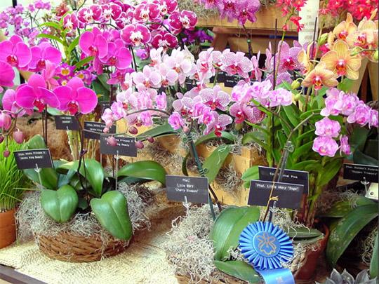Скоро!! IV Зимний фестиваль орхидей!!!