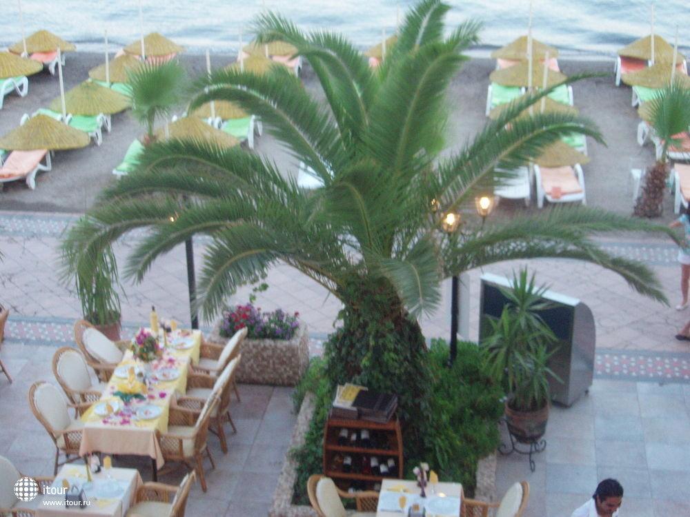 OCAKTAN, родная пальма, вид с окна