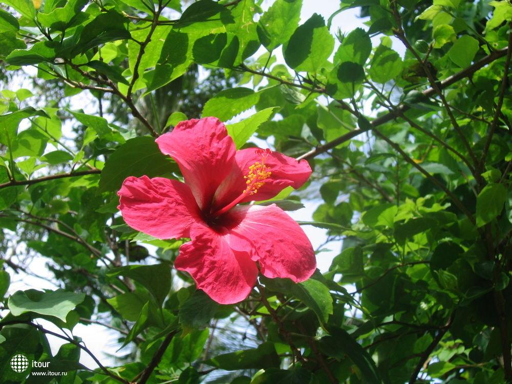 CHAWENG CABANA, райский сад