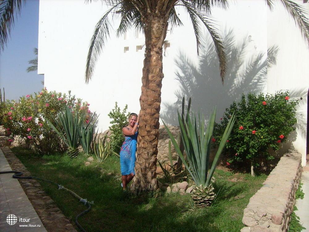 Al Diwan, Египет