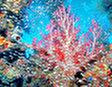 Коралловые Сады Хиккадувы