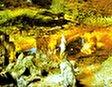 Пещера Доуго