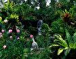 Парк Ботанические сады Сингапура