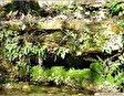 Эйн Хемед Национальный Парк