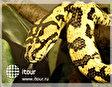 Музей тропических животных