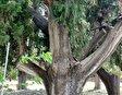 Деревушка Чирали