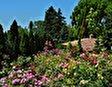 Ботанический сад во Дворце королевы Марии в Балчике