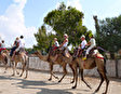 Джип - сафари с верблюдами