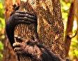 Национальный парк Гомбе-Стрим