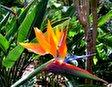 Ботанический сад (Пуэрто-де-ла-Крус)