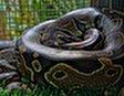 Змеиная ферма и шоу с кобрами