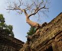 Сиемрип/Камбоджа- апрель 2010
