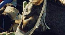 Тематический парк «Друзья кипрских осликов»