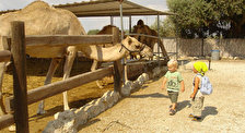 Верблюжья ферма «Дактари»