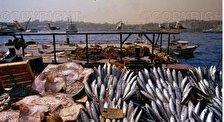 Рыбные рынки
