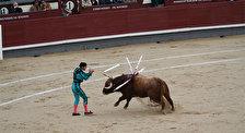 Мадридские праздники и фестивали с корридами
