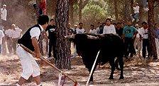 Праздник Toro de la Vega