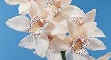 Фестиваль орхидей в Тарасконе