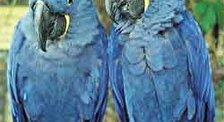 Праздник попугая