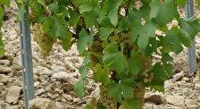 Бургундская винная дорога