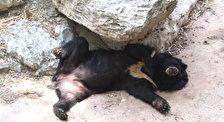 Зоопарк  «Сафари»