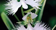 Парк Орхидей и Гибискусов