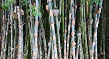 Ботанический сад Сьенфуэгоса