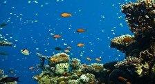 Заповедник Коралловый Пляж