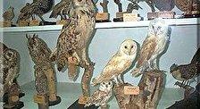 Музей Бейт Гордон