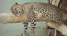Зоологический Парк в Беэр-Шева