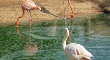 Парк диких животных Friguia