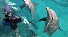 Дельфинарий на Исла Мухерес