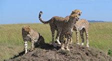 Национальный парк Шимба Хиллс