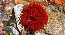 Пролив Тиран - популярная четверка коралловых рифов