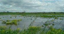 Заповедник Черное болото