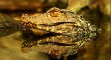 Крокотаун - мир крокодилов