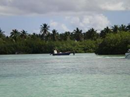 \браконьеры\ в мангровых рощах