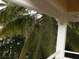 кокосы на балконе