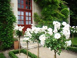 домик дворцового садовника
