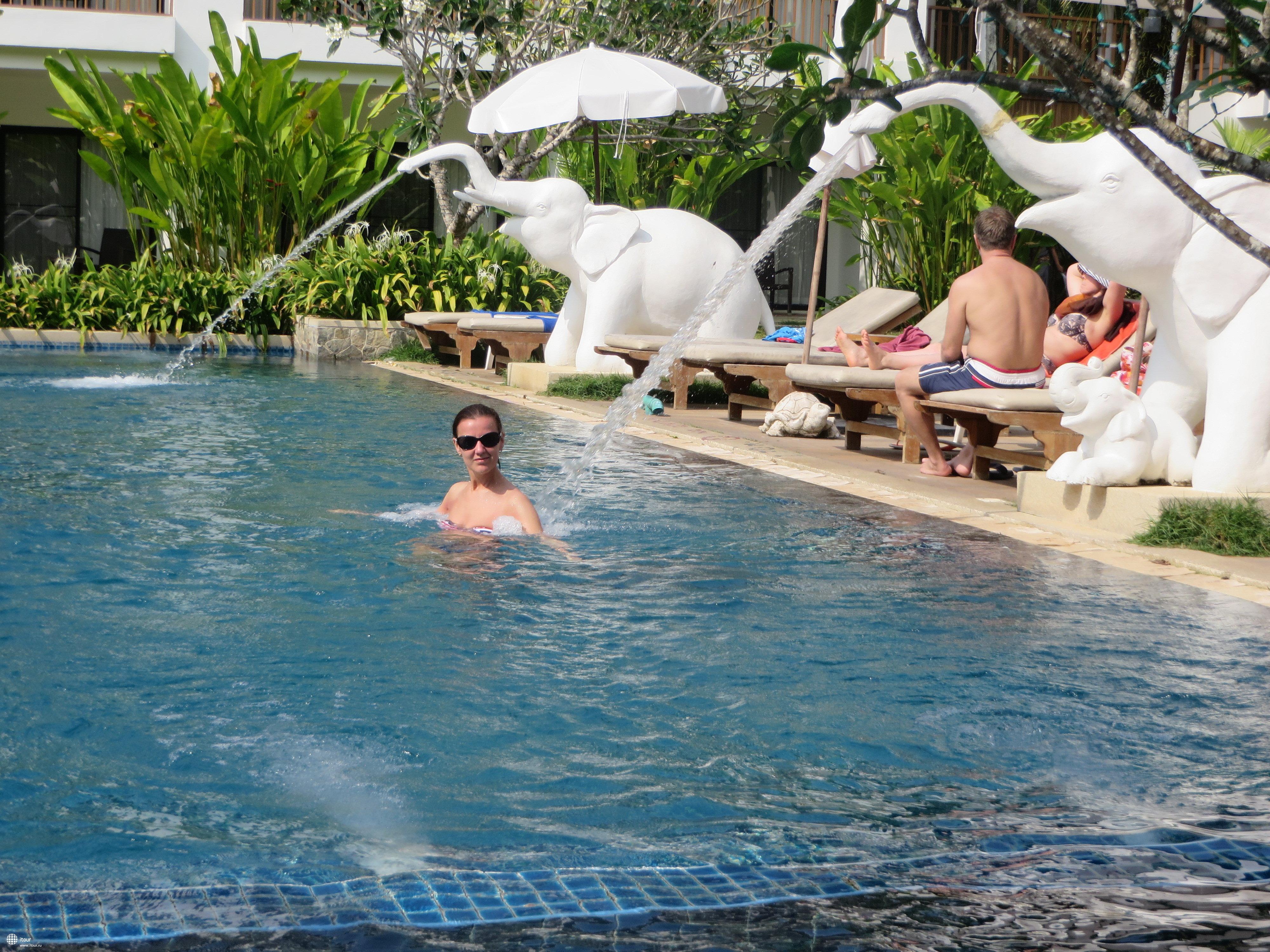 бассейн со слонами