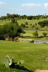 Palm Links golf course