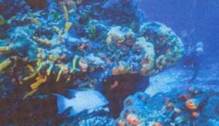 Goa Diving