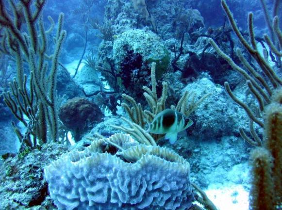 Diving at Cayo Coco and Cayo Guillermo