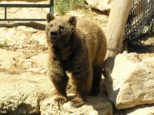 Зоопарк библейских животных