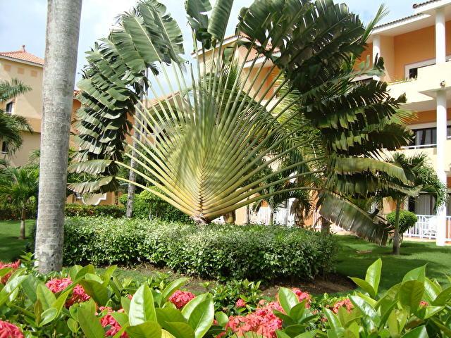 GRAN BAHIA PRINCIPE PUNTA CANA, Доминиканская республика