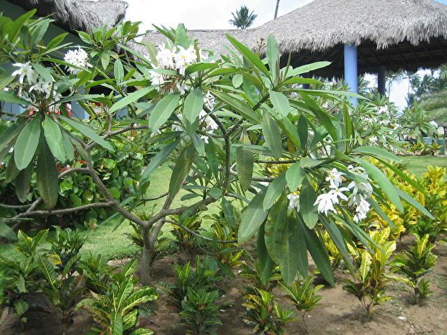 CARIBE CLUB PRINCESS RESORT & SPA, Доминиканская республика