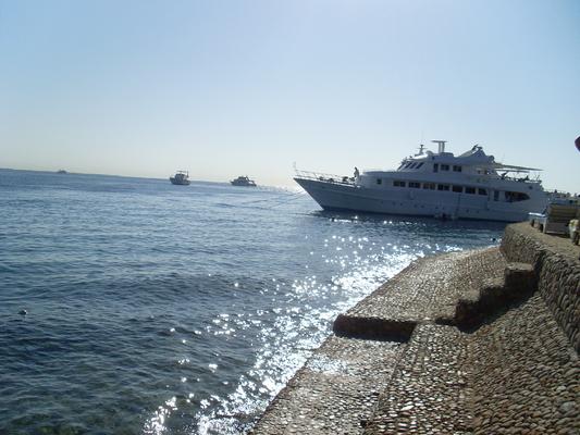 sea-gull-157130