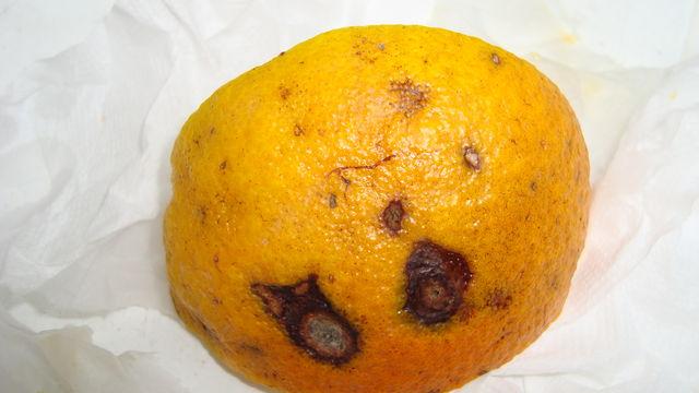 Апельсины, котлрыми кормят отдыхающих