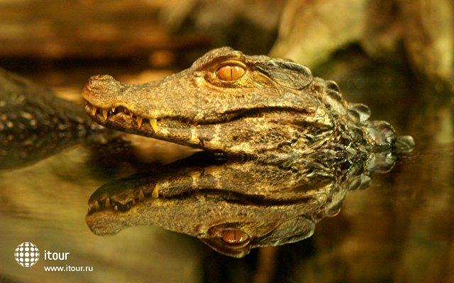 Картинки по запросу Крокотаун