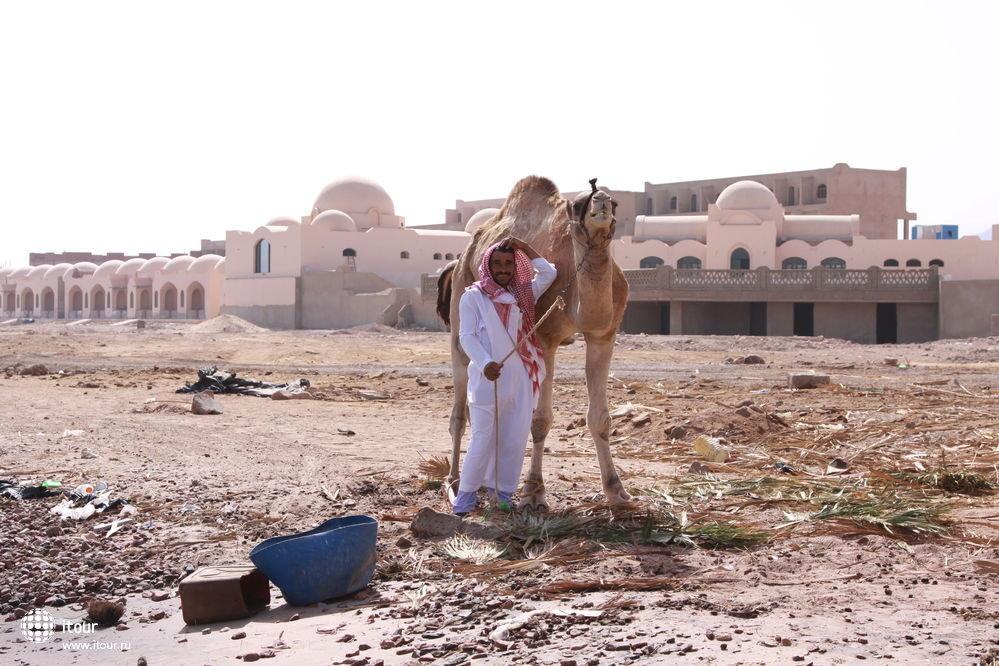 MORGANA AZUR TABA, Египет